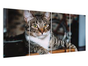 Obraz kočky (V020889V16080)