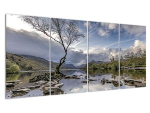 Obraz řeky se stromem (V020917V16080)