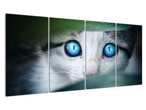 Obraz kočky (V020944V16080)