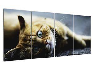 Obraz kočky (V020963V16080)
