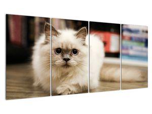 Obraz bílé kočky (V021124V16080)