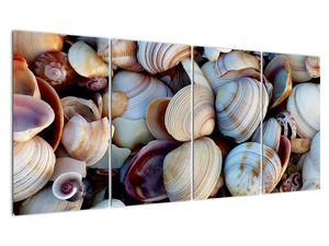 Kagyló képe (V021131V16080)