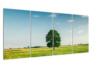 Obraz stromu na louce (V021171V16080)