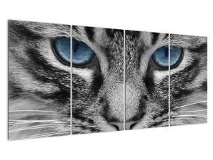 Obraz kočky (V021221V16080)