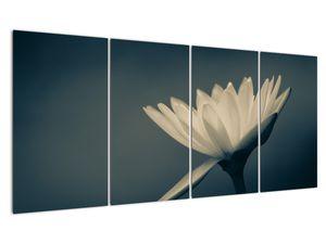 Obraz květiny (V021223V16080)