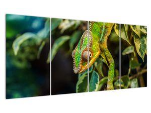 Obraz chameleona (V021236V16080)
