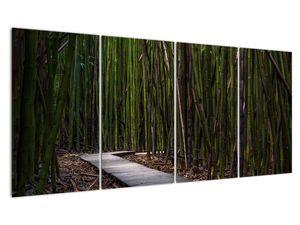 Obraz - Medzi bambusy (V021324V16080)
