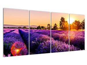 Obraz levandulového pole, Provence (V021590V16080)