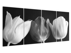 Kép - fekete-fehér tulipán virág (V021916V16080)