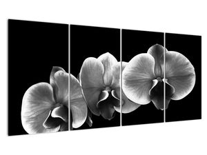 Obraz květu orchideje (V022015V16080)