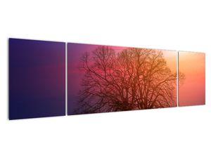 Obraz stromů v mlze (V020088V17050)