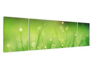 Obraz - rosa na trávě (V020169V17050)