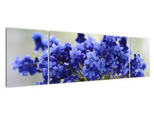 Obraz kytice modrých květů (V020175V17050)