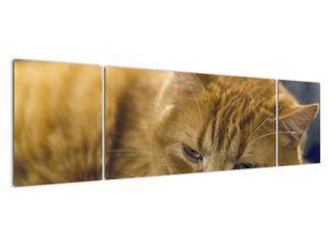 Obraz mačky (V020192V17050)