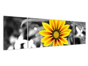 Obraz žluté květiny (V020361V17050)