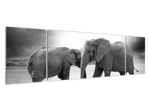 Obraz - černobílí sloni (V020398V17050)