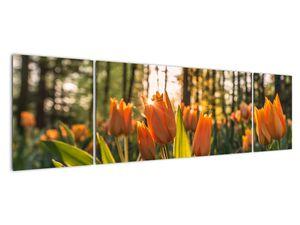 Obraz - oranžové tulipány (V020552V17050)