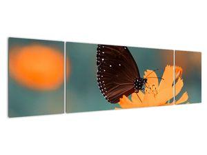 Obraz - motýl na oranžové květině (V020577V17050)