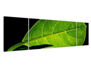 Obraz - zelený list (V020628V17050)