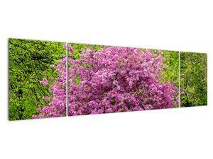 Obraz rozkvetlého stromu na louce (V020654V17050)