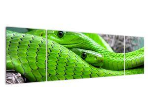 Obraz zelených hadů (V020689V17050)