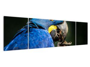 Obraz papouška (V020714V17050)