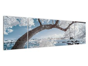 Obraz zasněženého stromu u vody (V020718V17050)