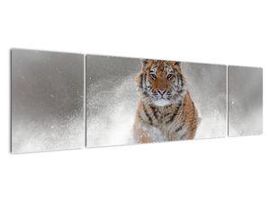 Obraz bežiaceho tigra v snehu (V020719V17050)