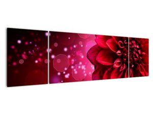 Obraz červené kvety (V020807V17050)