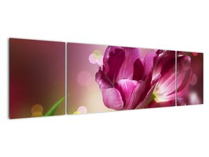 Obraz růžových tulipánů (V020887V17050)