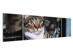 Obraz kočky (V020889V17050)