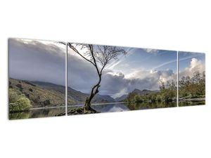 Obraz řeky se stromem (V020917V17050)