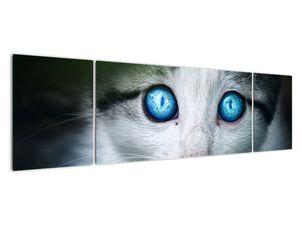Obraz kočky (V020944V17050)