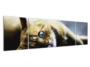 Obraz kočky (V020963V17050)