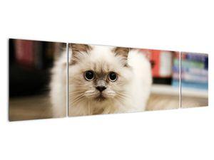 Obraz bílé kočky (V021124V17050)