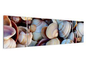 Kagyló képe (V021131V17050)