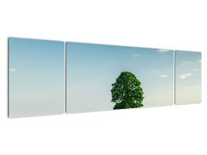 Obraz stromu na louce (V021171V17050)