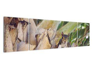 Obraz veverky na stromu (V021177V17050)