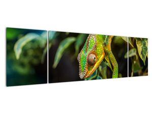 Obraz chameleona (V021236V17050)
