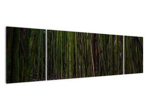 Obraz - Medzi bambusy (V021324V17050)