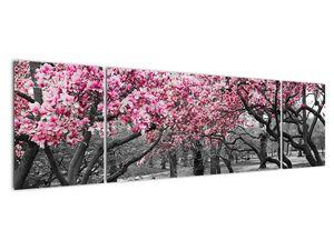 Obraz stromů Magnolíie (V021344V17050)