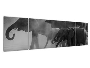 Obraz slonů - černobílý (V021575V17050)