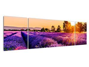 Obraz levandulového pole, Provence (V021590V17050)