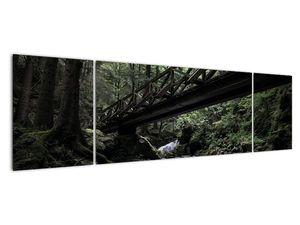Obraz z černého lesa (V021686V17050)