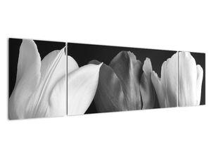 Kép - fekete-fehér tulipán virág (V021916V17050)