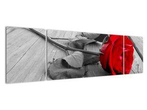 Slika rdeče vrtnice (V022288V17050)