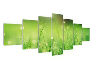 Obraz - rosa na trávě (V020169V210100)