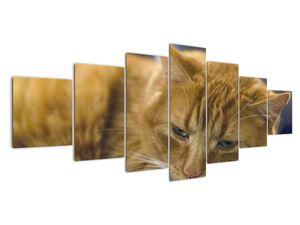 Obraz mačky (V020192V210100)