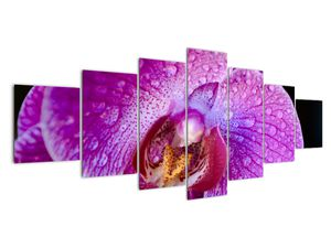Detailní obraz květu orchideje (V020314V210100)