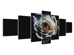 Obraz bílé růže (V020370V210100)